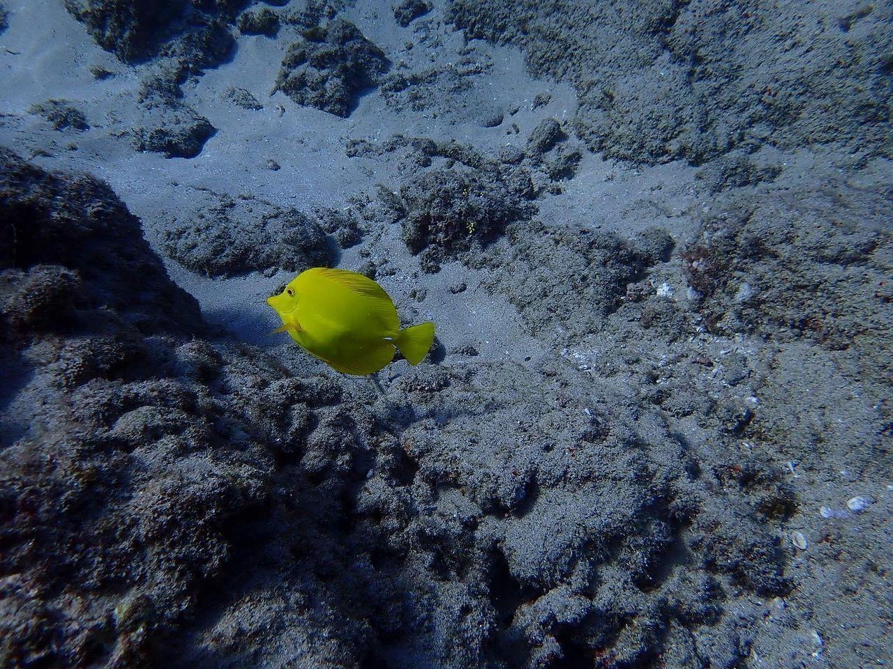 透明な海に綺麗な魚